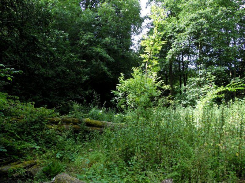 Au Sud du Peak District : Ilam Park