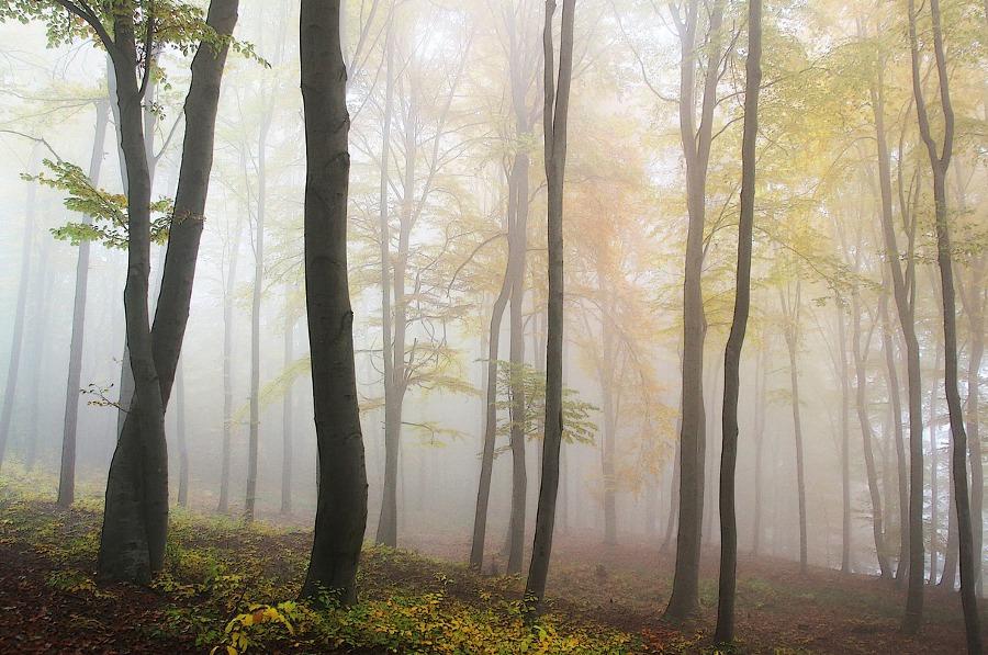 Chroniques Anglaises #7 : Deux semaines dans le brouillard
