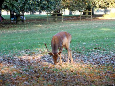 Balade(s) au Burghley Park