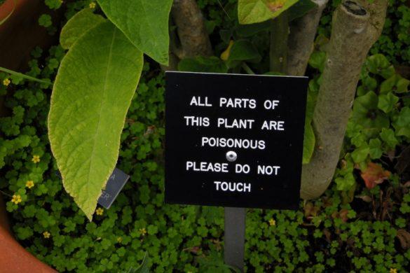 Errer dans les Barnsdale Gardens
