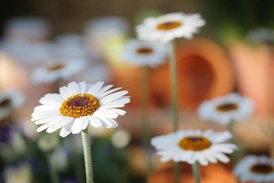 Chroniques anglaises #42 : Le printemps est arrivé !