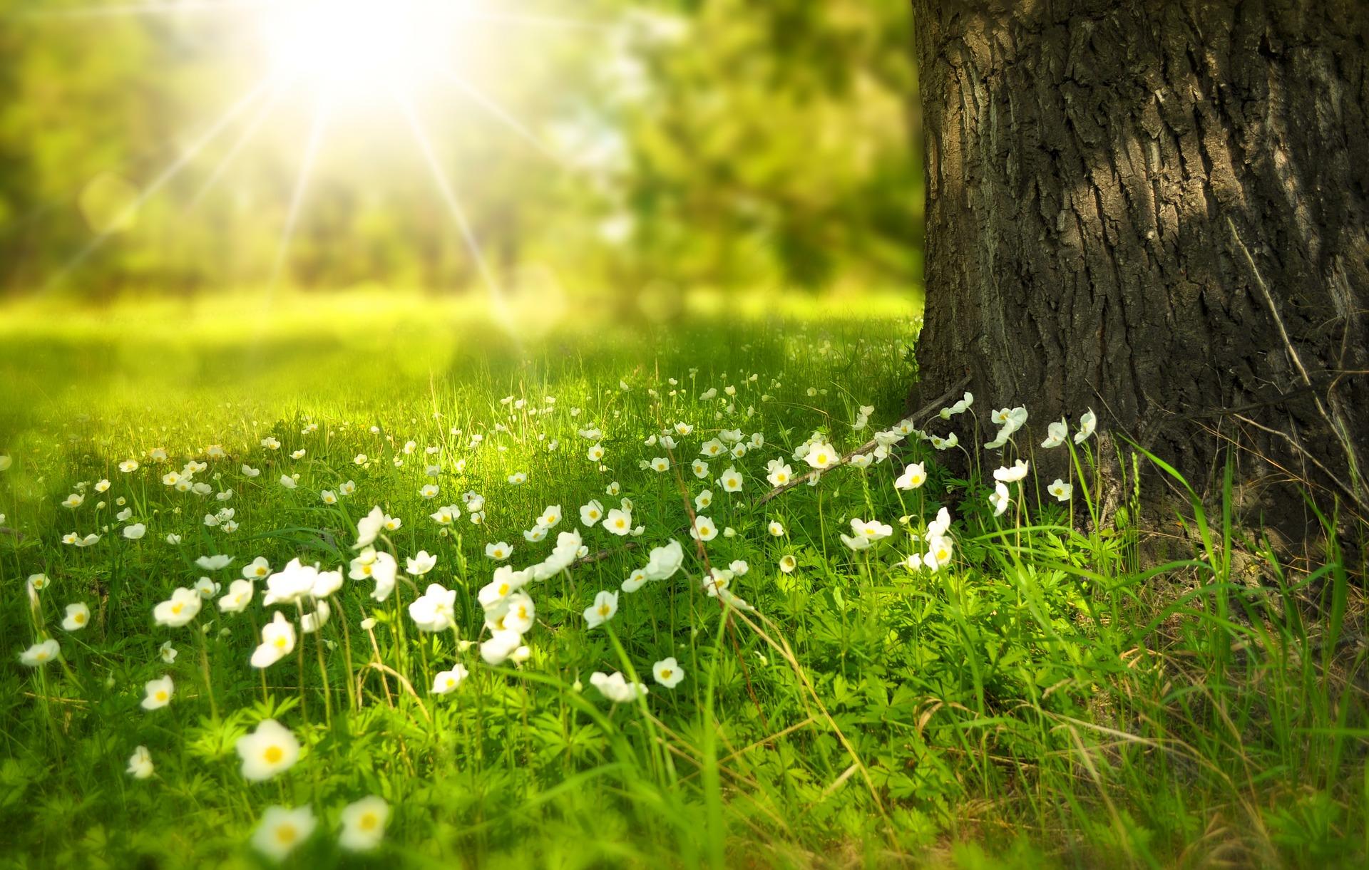 Chroniques anglaises #44 : Fin de printemps
