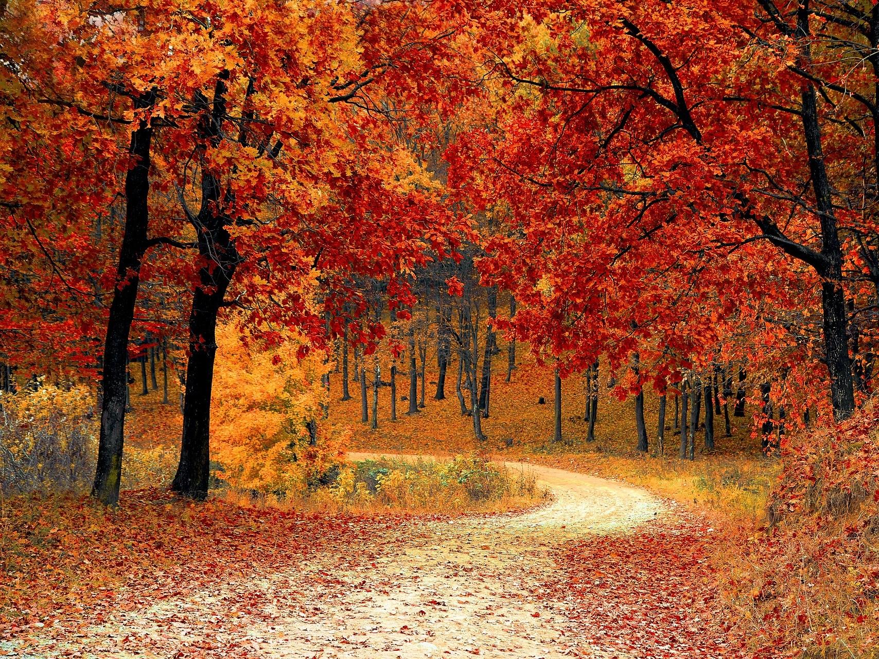 Chroniques anglaises #58 : automne, lecture et fleurs