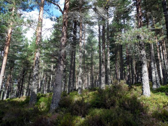 Randonnée expresse : du Loch Morlich au Green Loch