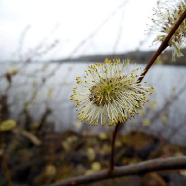 Loch Lomond, Trossachs