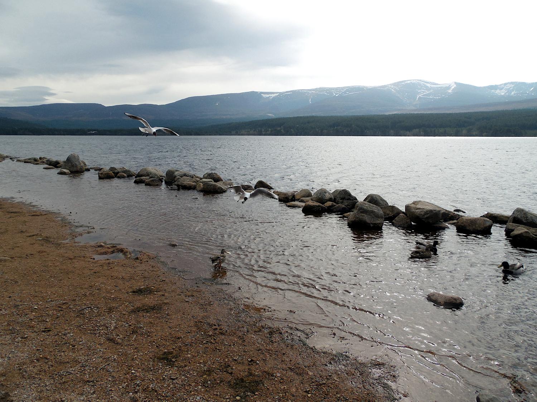Loch Morlich, Highlands d'Ecosse