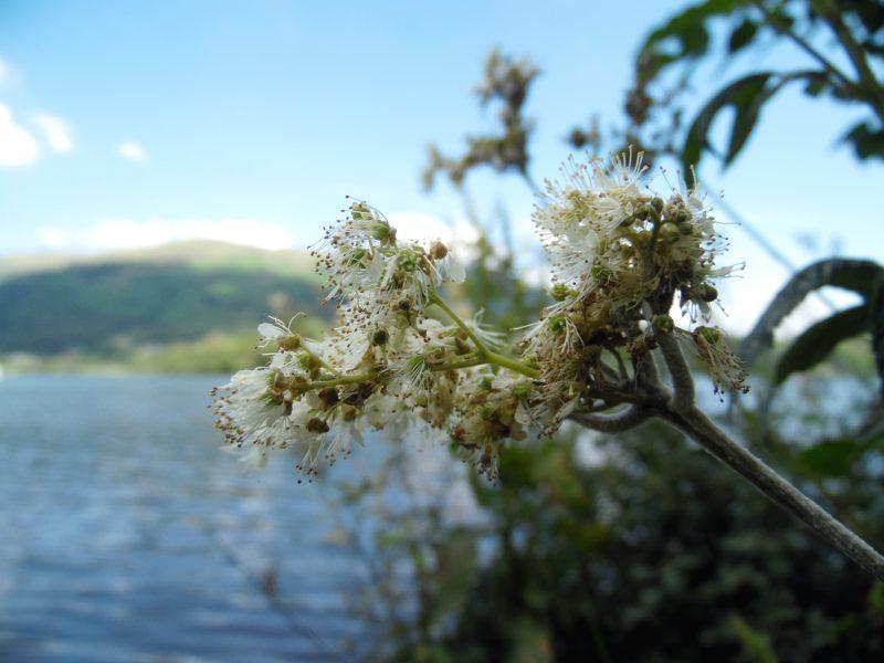 Un long weekend dans le Lake District