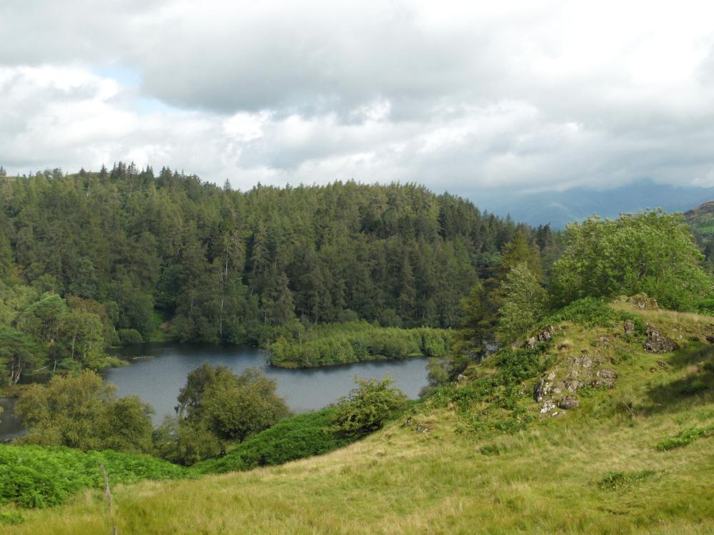Un joli point de vue sur Tarn Hows