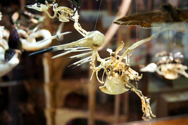 The Viktor Wynd Museum of Curiosities, Fine Art & UnNatural History