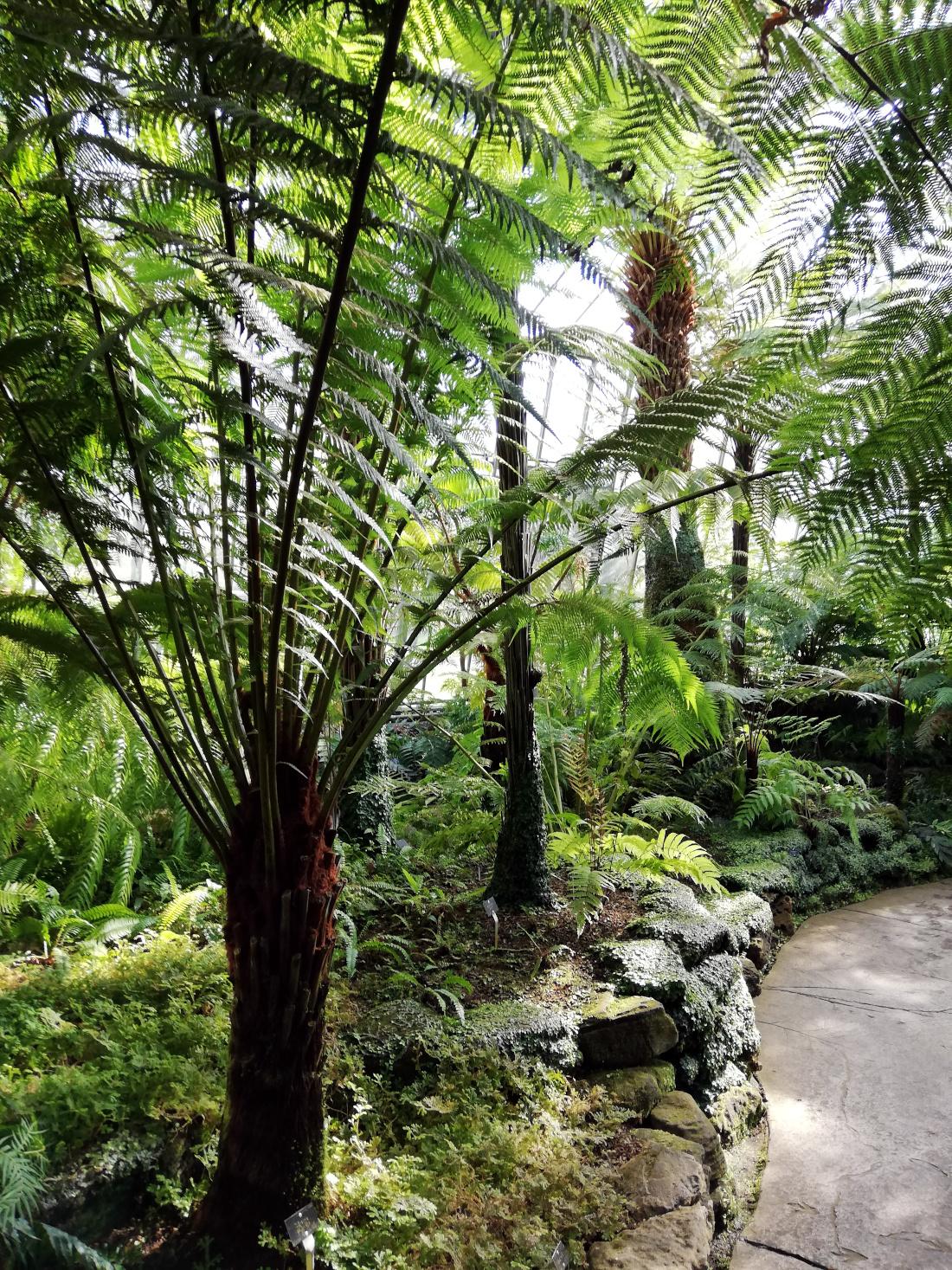Les serres du Royal Botanic Gardens à Edimbourg