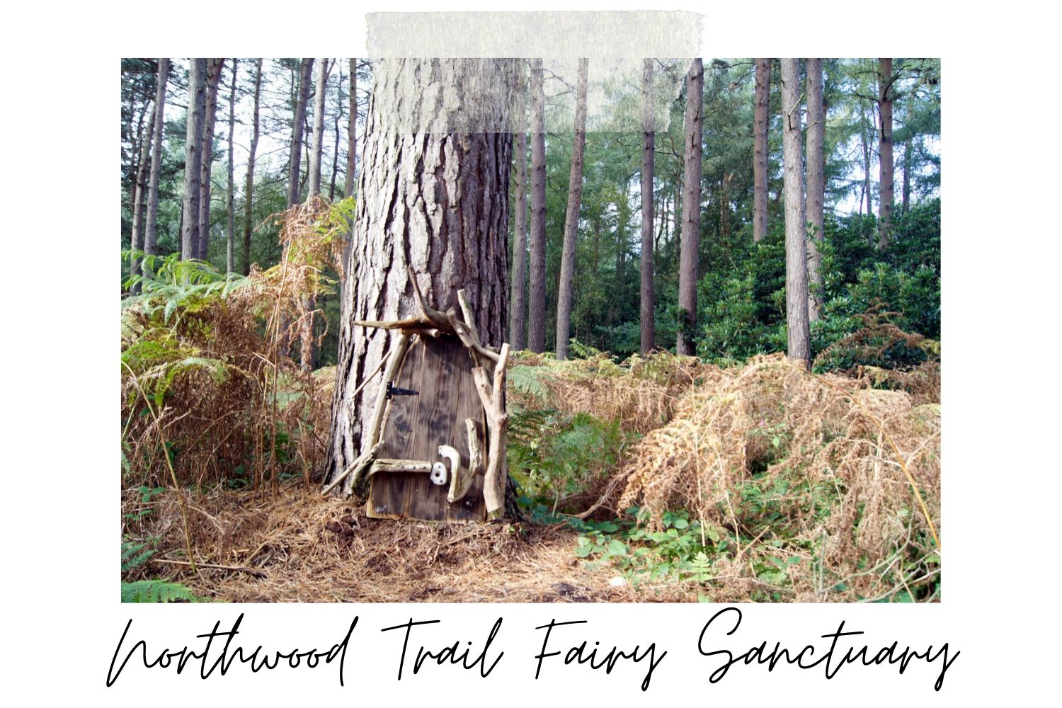 Northwood Trail Fairy Sanctuary