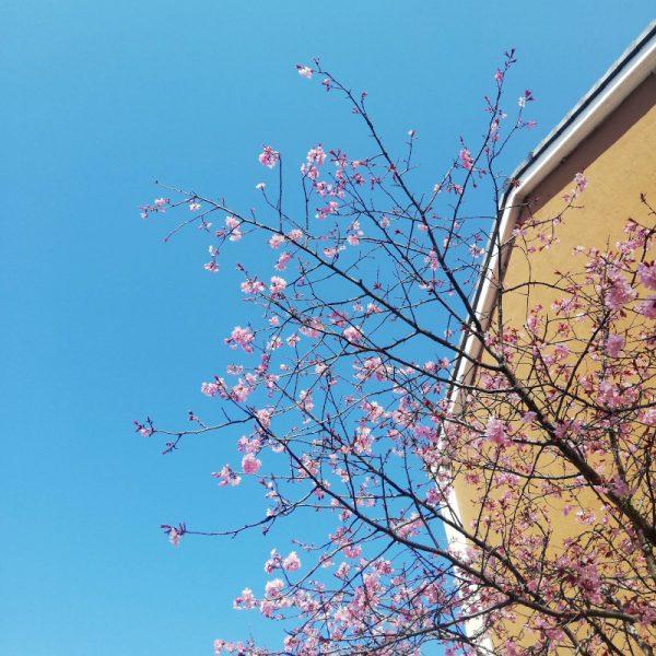 Le printemps à Scarborough
