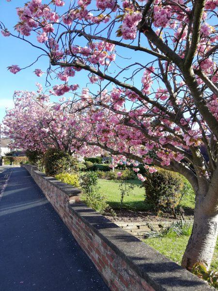 Chroniques anglaises #91 : Et sinon, c'est le printemps / Covid-19