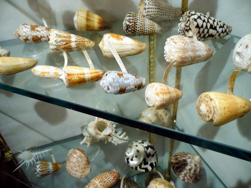 Le petit musée de Dartmouth