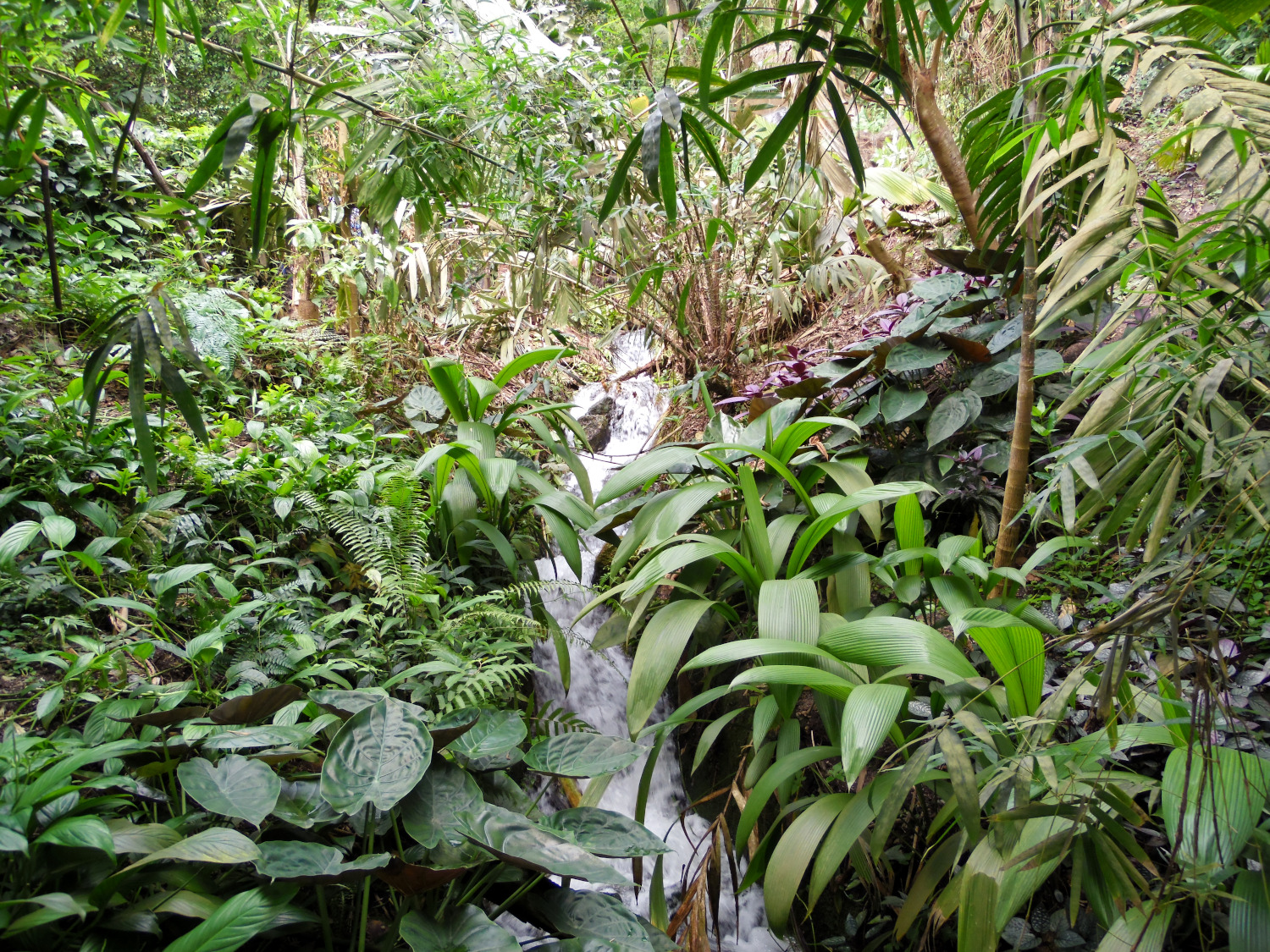 The Eden Project : le biome tropical