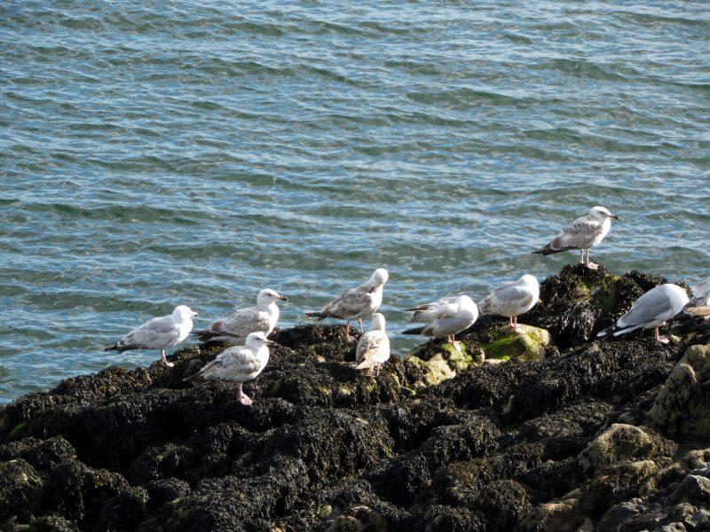 Les eaux turquoises de Plymouth