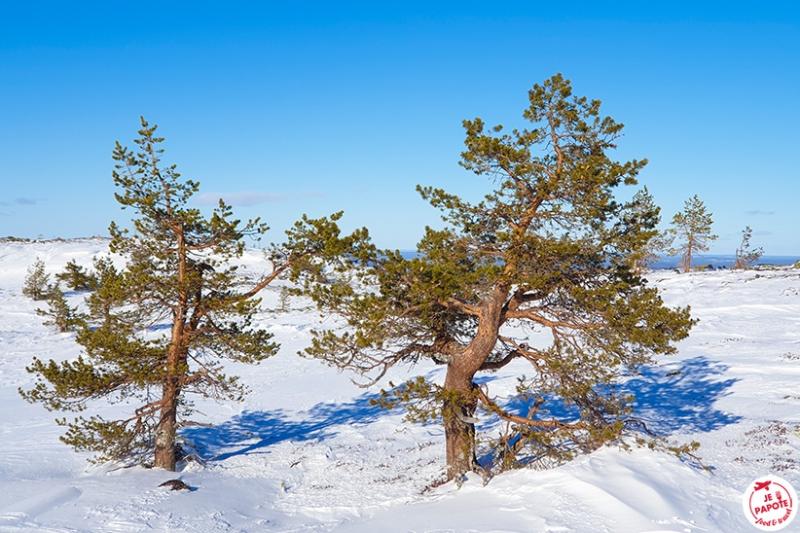 Céline en Laponie