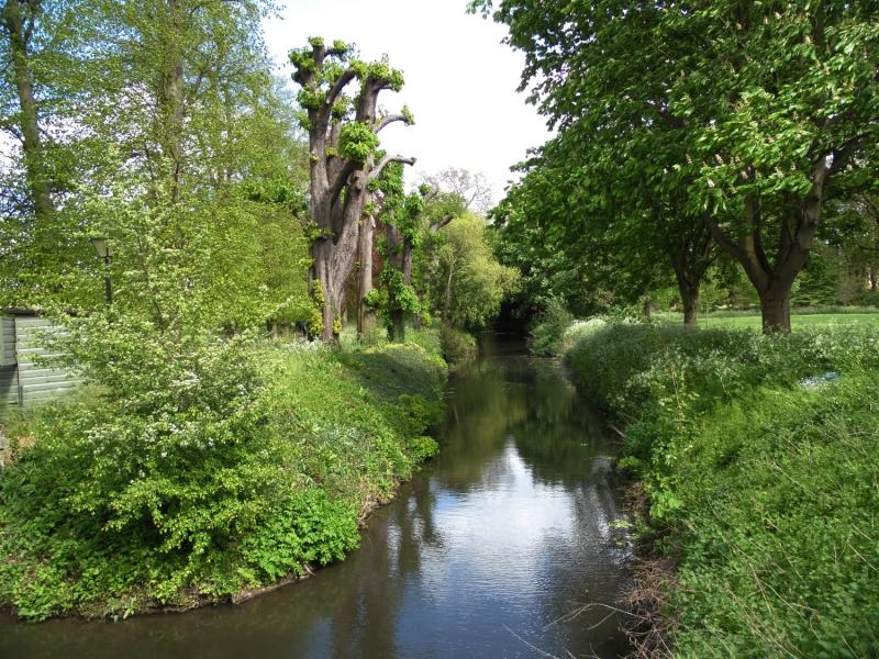 Espaces verts à Cambridge