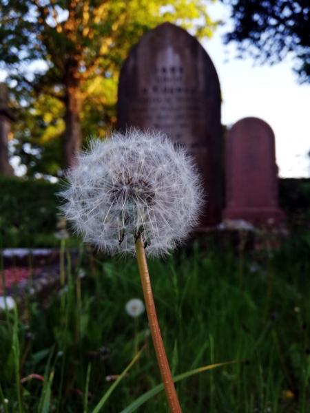 Dean Cemetery, Scarborough