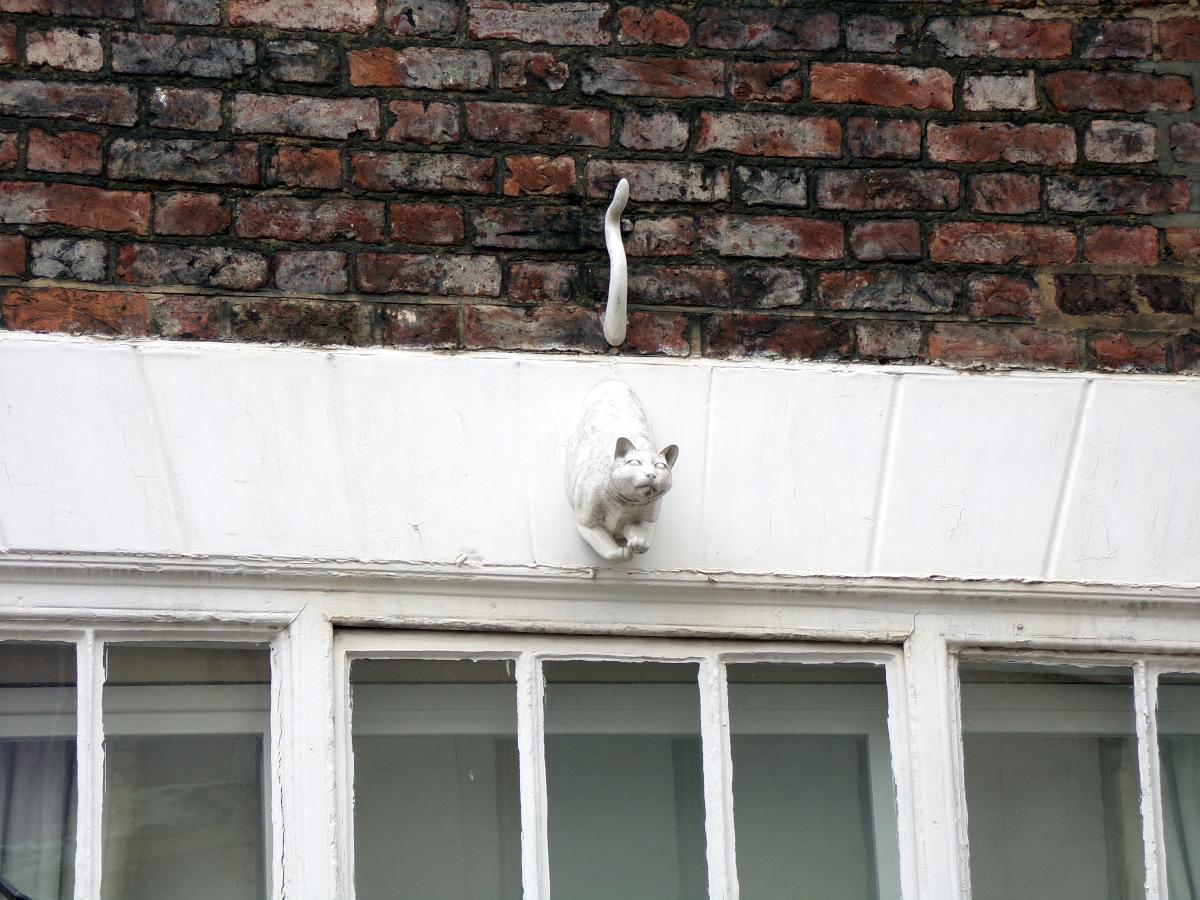 Le York Cat Trail : Suivons les chats !
