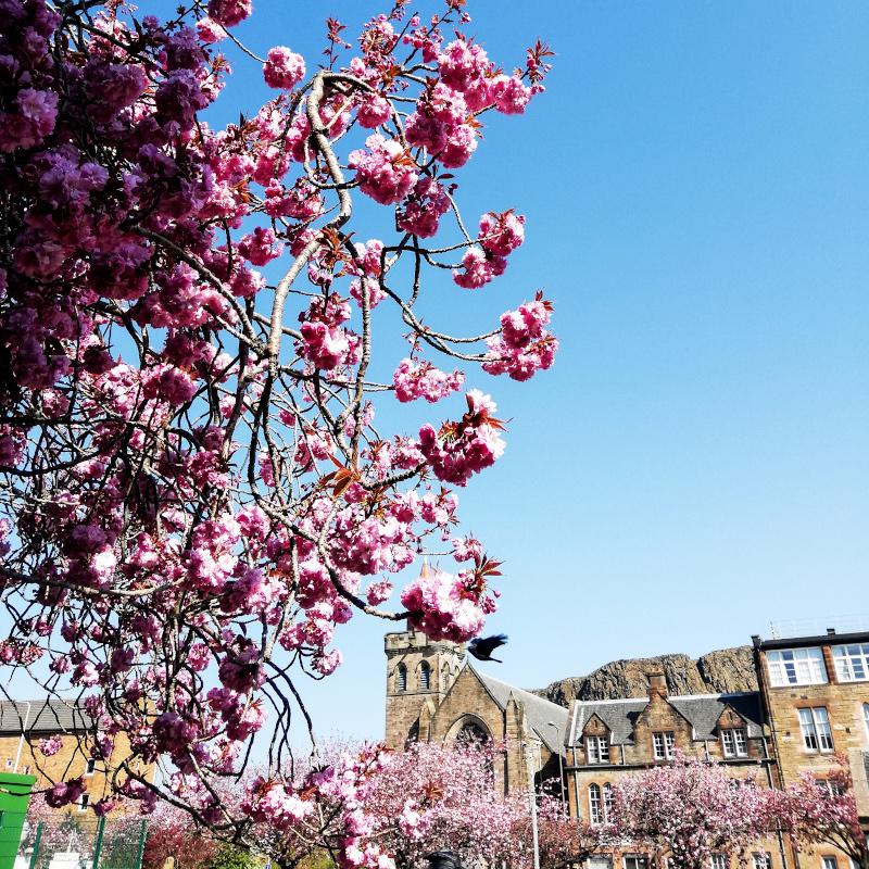 Meadows fleuris à Edimbourg