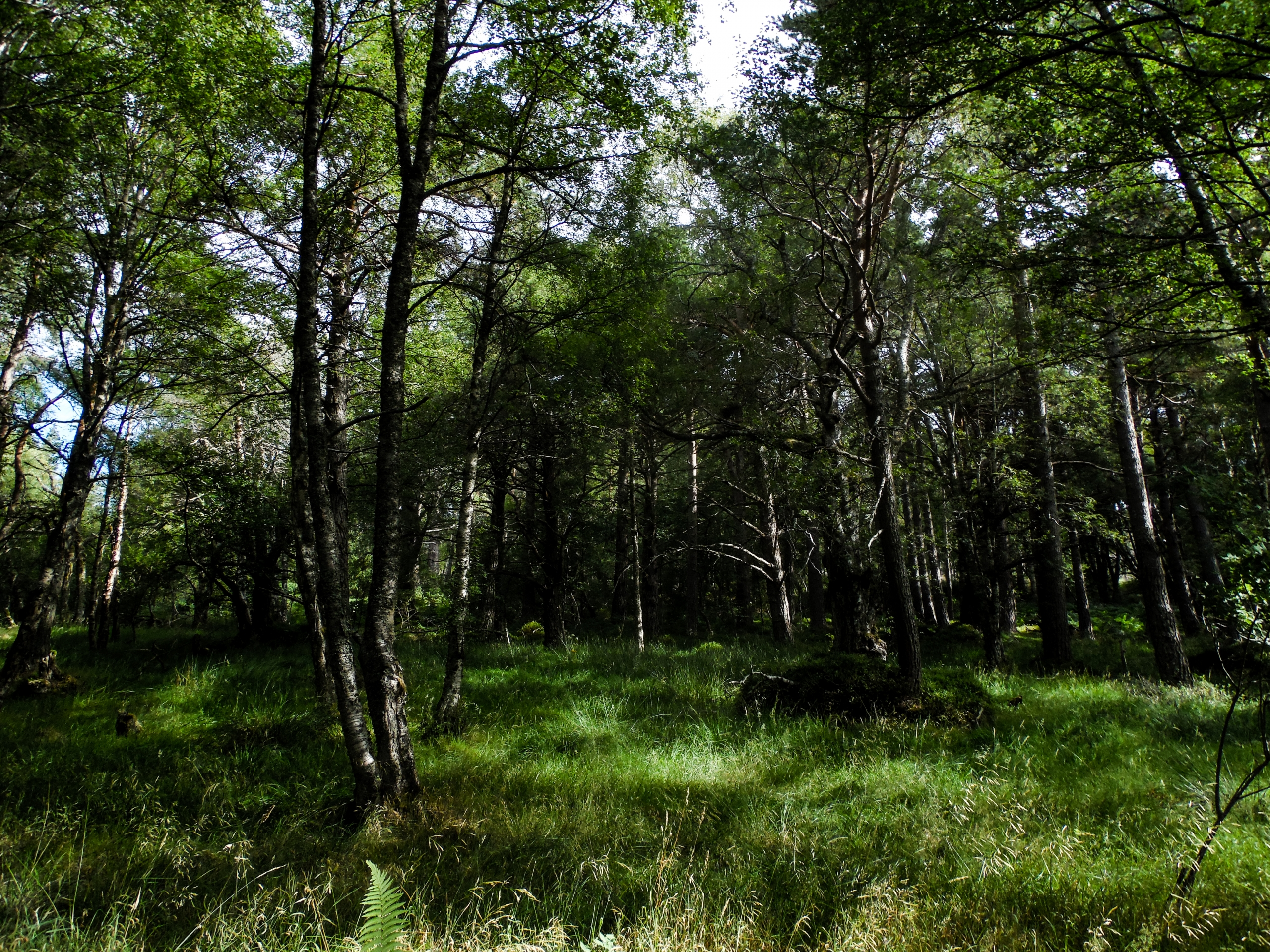 Aviemore Forest