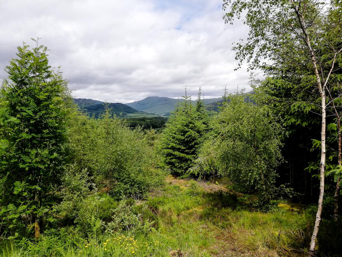 The Three Lochs Forest Drive, une route scénique dans les Trossachs