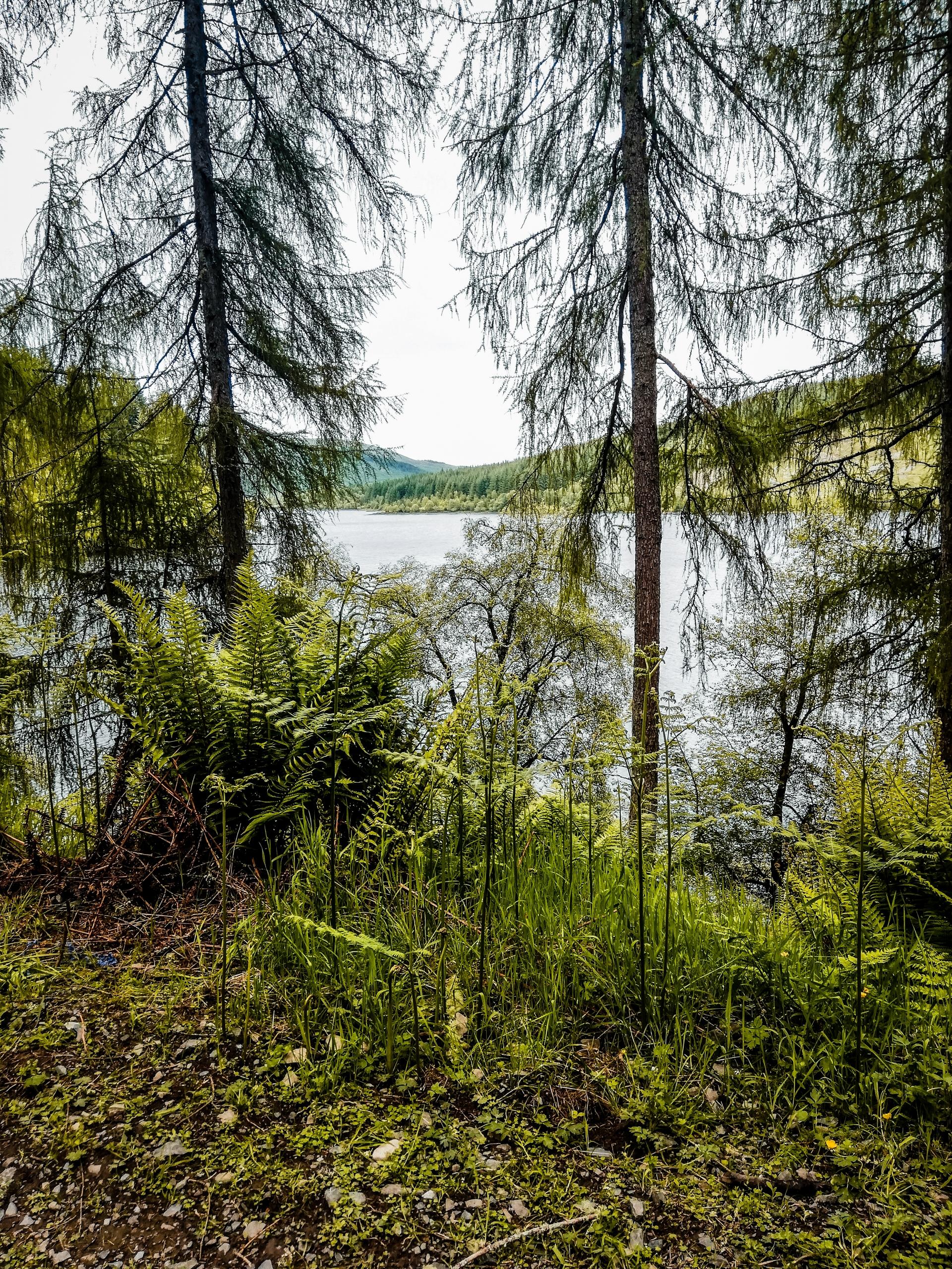 The Three Lochs Forest Drive : une route scénique dans les Trossachs
